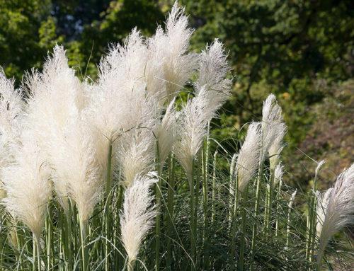 Stilvolles Blattwerk: Ziergräser für Ihren Garten